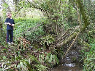 stream in a woodland dell
