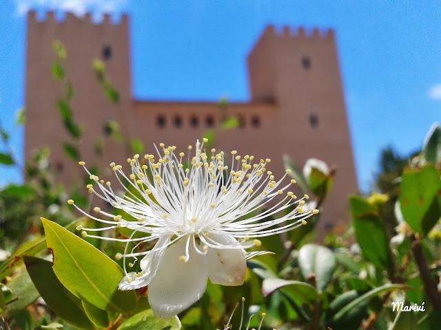 Castell-Palau-Albalat-dels-Sorells