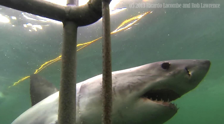 400-year-old Greenland shark is oldest vertebrate animal ...