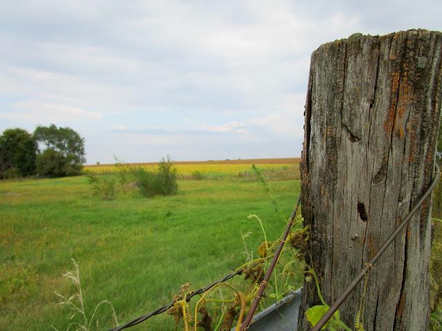 A Walk Around the Farm courtneylthings.blogspot.com