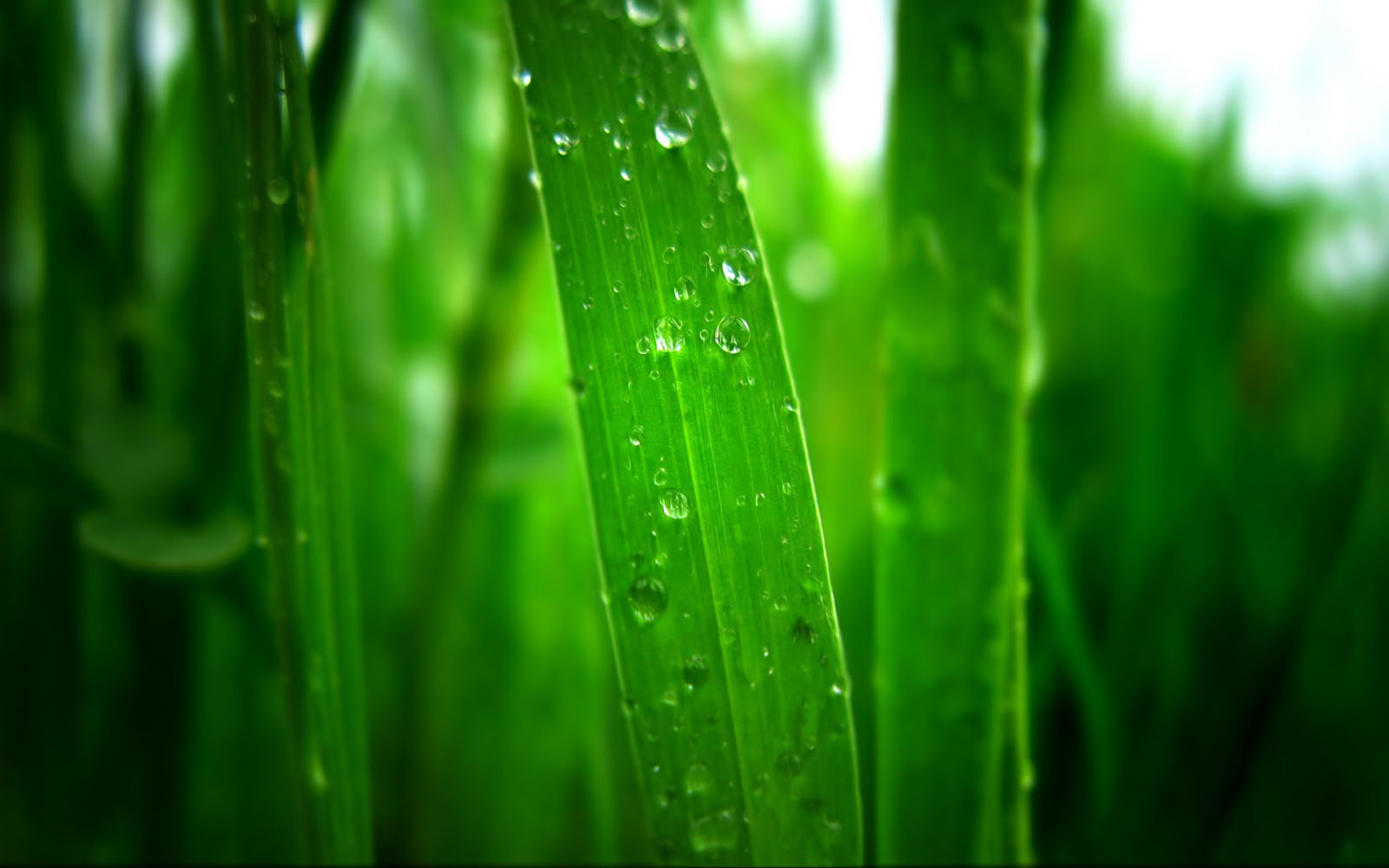 wallpapers: morning dew photographs