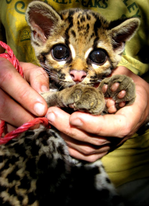 Baby Wild Cats   Top Images