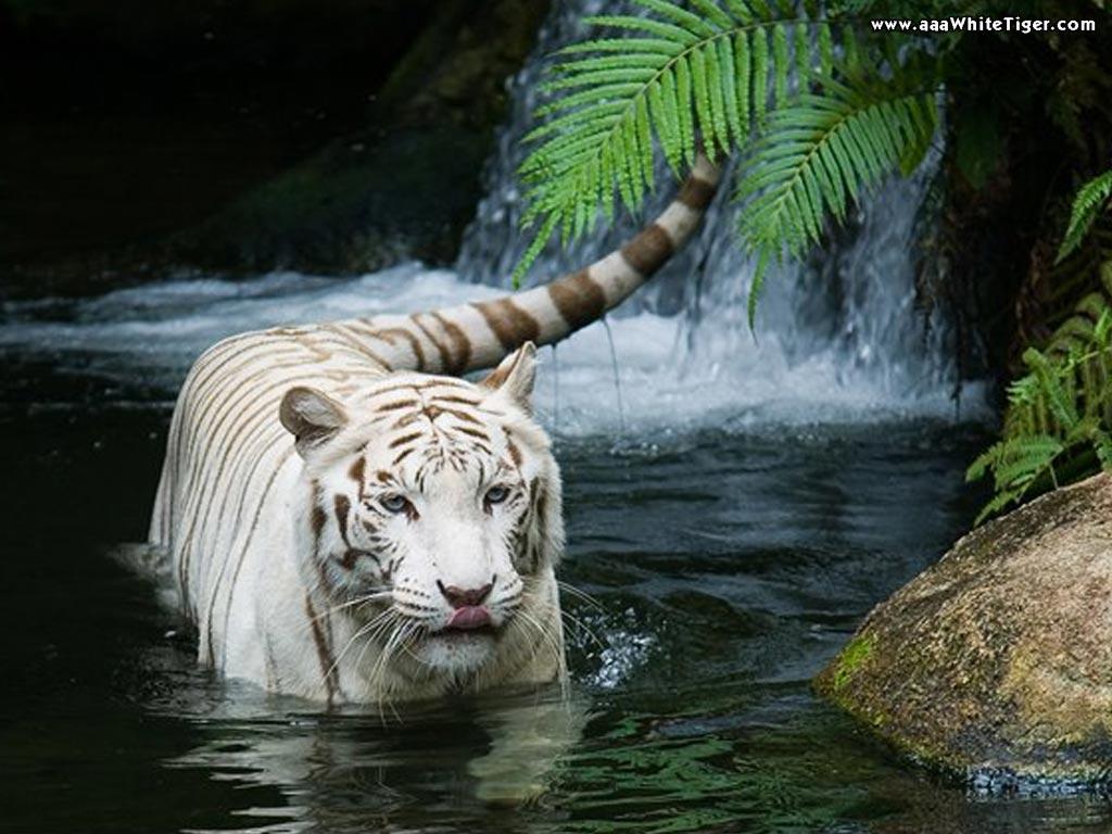 http://3.bp.blogspot.com/-57XW6DCTxnY/TwwepKtpYnI/AAAAAAAAAco/UjPb-wjXouI/s1600/Animal%2BWallpaper%2BHd_4.jpg
