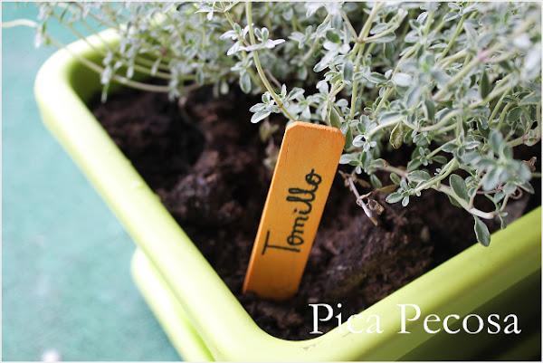Plantas que necesitan luz cuidar de tus plantas es - Huerto urbano leroy ...