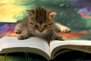 kitten reading a book