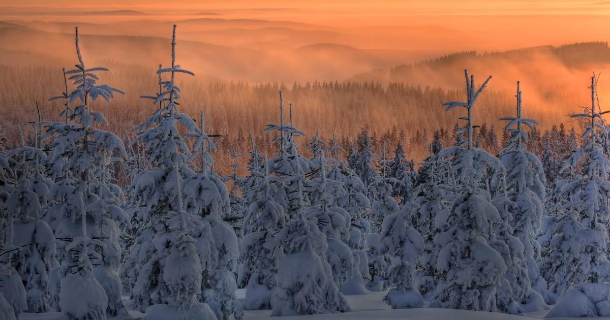 banco de fotos bosques de abetos en invierno paisajes naturales