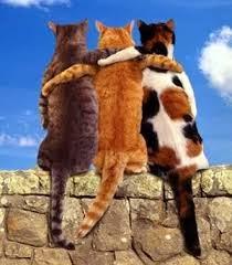 gatos se abraçando