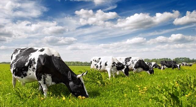 Молочная отрасль Испании: cambios o muerte!