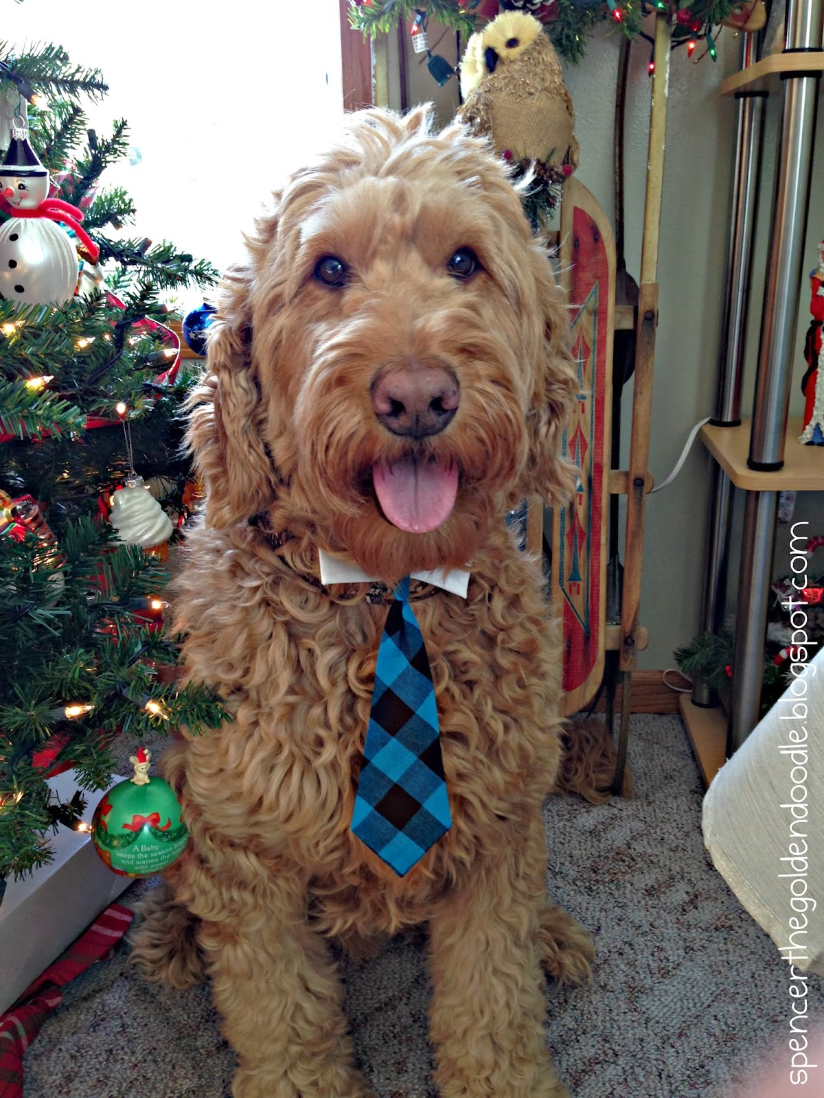spencer the goldendoodle christmas tales