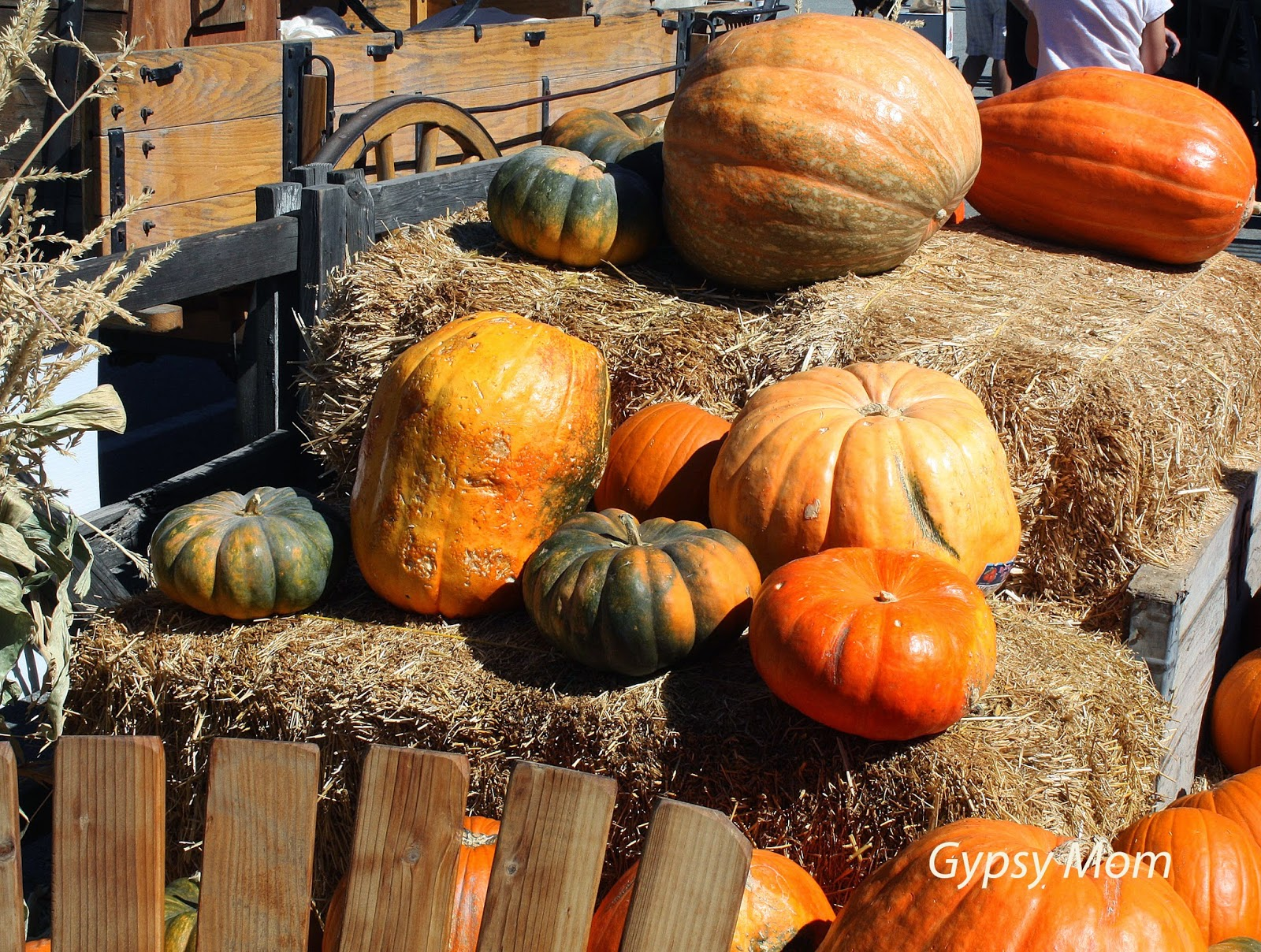 Pumpkins in Oak Glen, CA