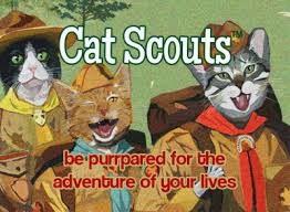I'm A Cat Scout