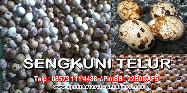 supplier telur surabaya