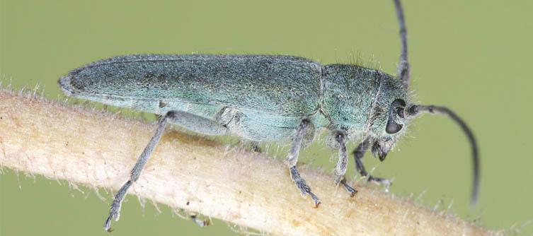 Boletín Sociedad Andaluza de Entomología Vol. 16