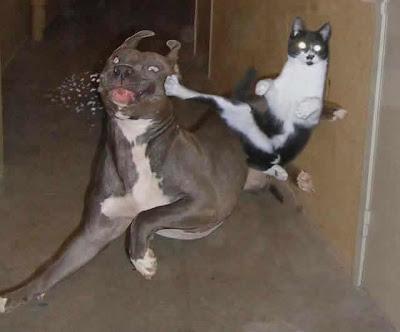 Fotos de gatos pequeños y grandes divertidas