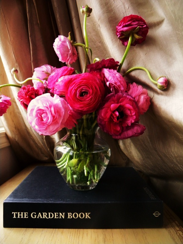 Patti Friday The Prettiest Pink Flowers