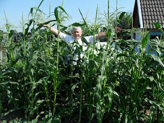 Кукуруза создает заросли