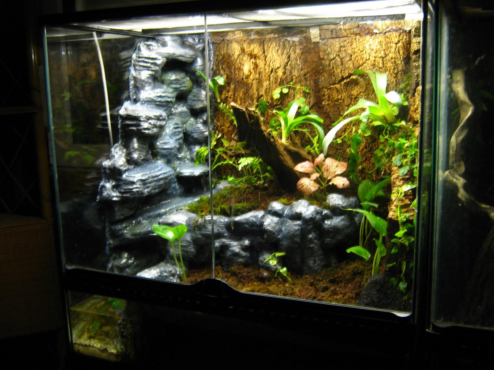 Террариум для наземных лягушек и жаб, размеры террариума 47