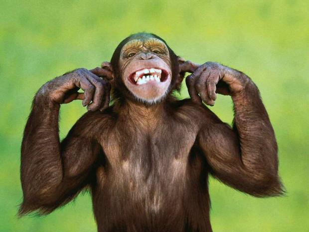 Animales Sonriendo