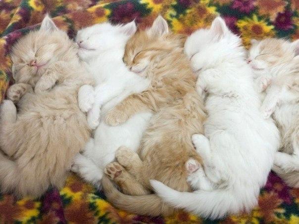 красивые и милые фото котят