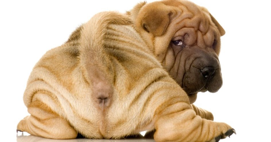 The Dog In World Diarrhea In Dogs And Puppies How To