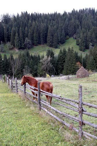 Фото Укринформ: конь