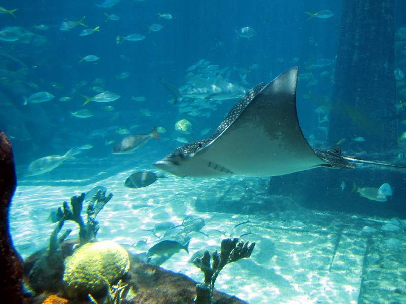 Download this Atlantis Paradise Island Bahamas Travel Guide picture
