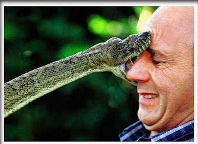 gambar_ular_20