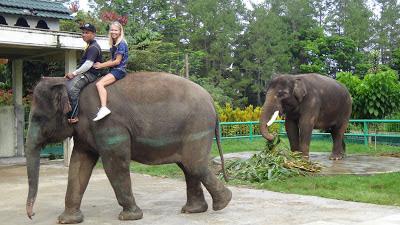 Bukit tinggi zoo, Sumatra, Indonesia, elephant