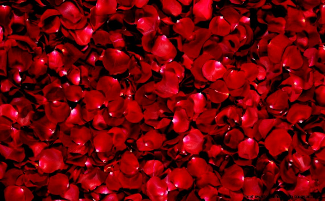 Beautiful Red Flowers Photo Hd Wallpaper Free High Definition