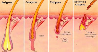 Est 233 Tica Higiene E Sa 250 De Anatomia Do P 234 Lo