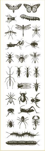 Guia de abelhas e insetos da América do Norte