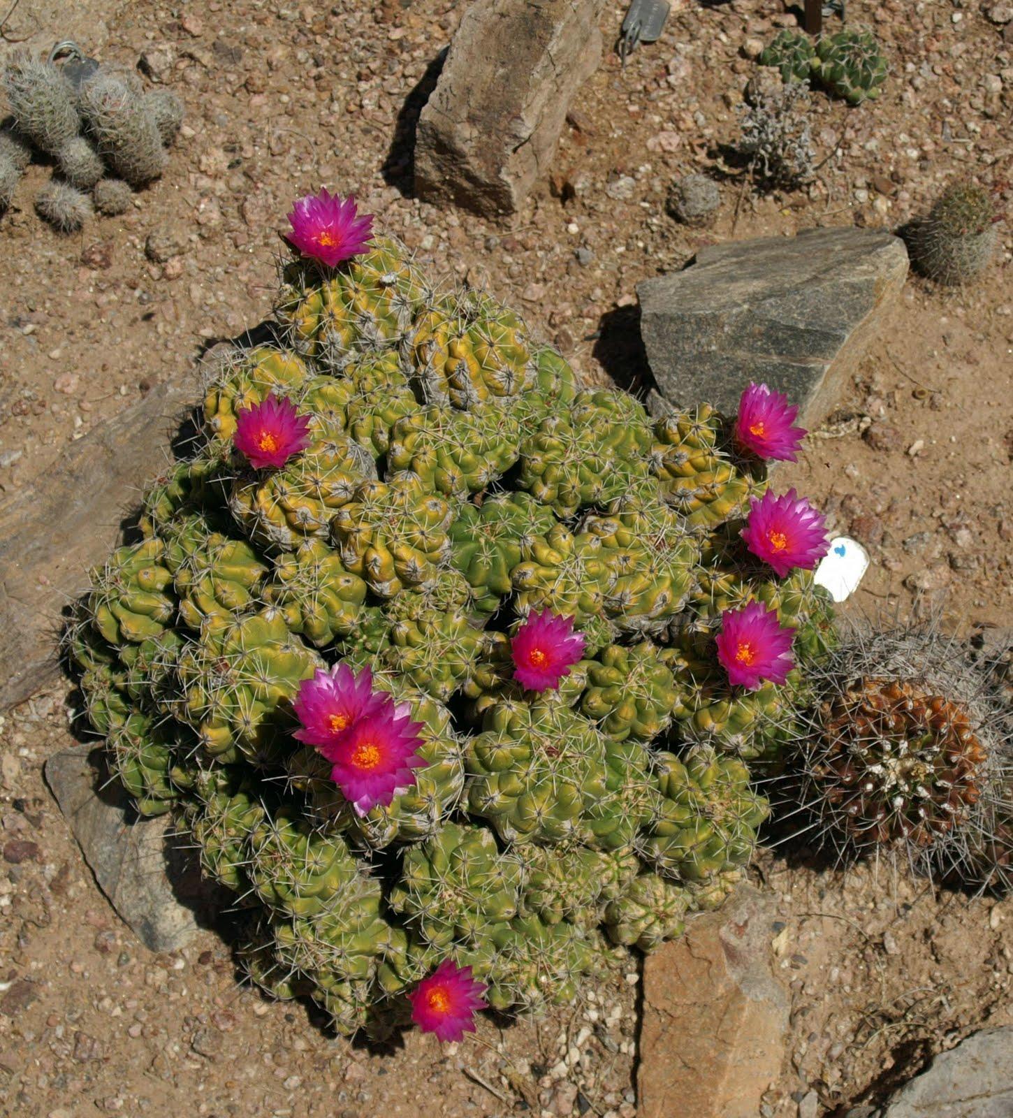 Annie and Rich\'s Travel Adventures: Arizona - Phoenix - Botanical Garden