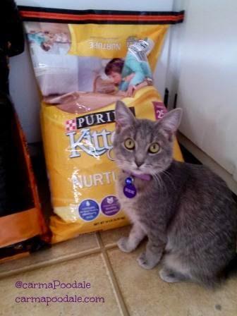 Purina Kitten Chow made Molly Mew happy
