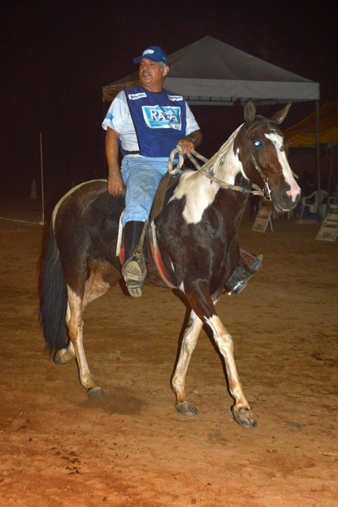 Além da beleza, o cavalo pampa é também muito apreciado pela velocidade e agilidade. A espécie chama a atenção pela elegância e variedade de pelagem