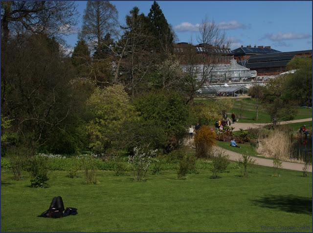 Kopenhaga Ogród Botaniczny