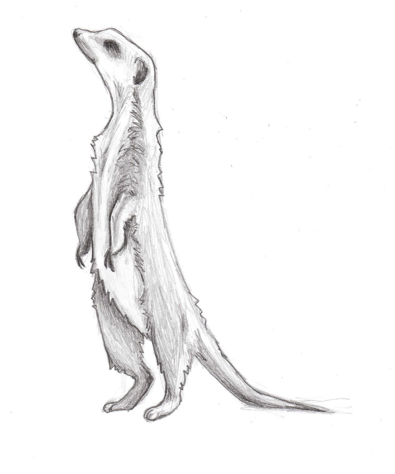 Simple meerkat drawing