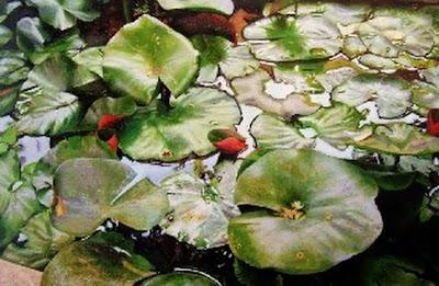pinturas-de-plantas