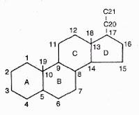 Suatu inti steroid. lnti ini mempunyai empat cincin: A, B, G, dan D. Nomor-nomor menunjukkan karbon-karbon di dalam molekul. Adanya gugus yang berikatan dengan karbon-karbon ini dapat diketahui dari nomor yang dipakai, Contohnya, steroid 17- hidroksi berarti mempunyai gugus hidroksi yang berikatan dengan karbon pada posisi 17.
