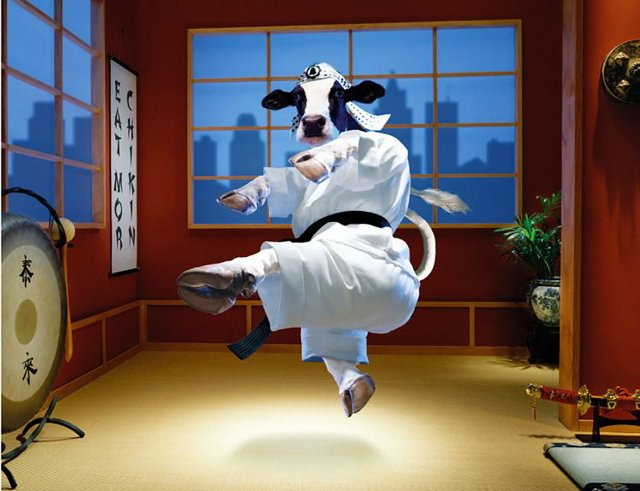 Funny Cow New Photos Images