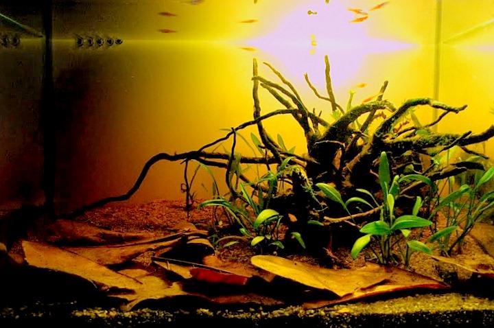 Borko S Hobbies Nano Biotope Aquariums