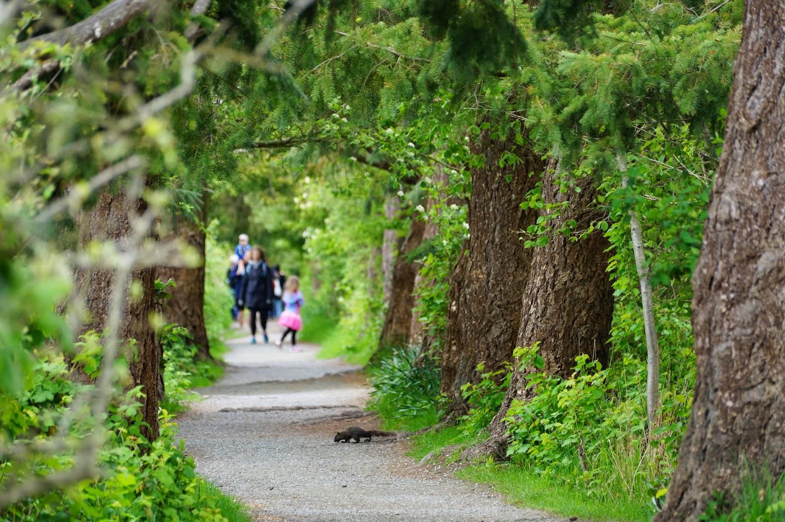 Сюда в дневное время пускают посетителей, где они могут побродить по вот таким дорожкам вдоль деревьев и прудов