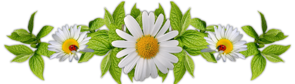 Resultado de imagen para margarita flores png