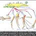 P-92 Para demostrar la existencia de cambios evolutivos en las especies ...
