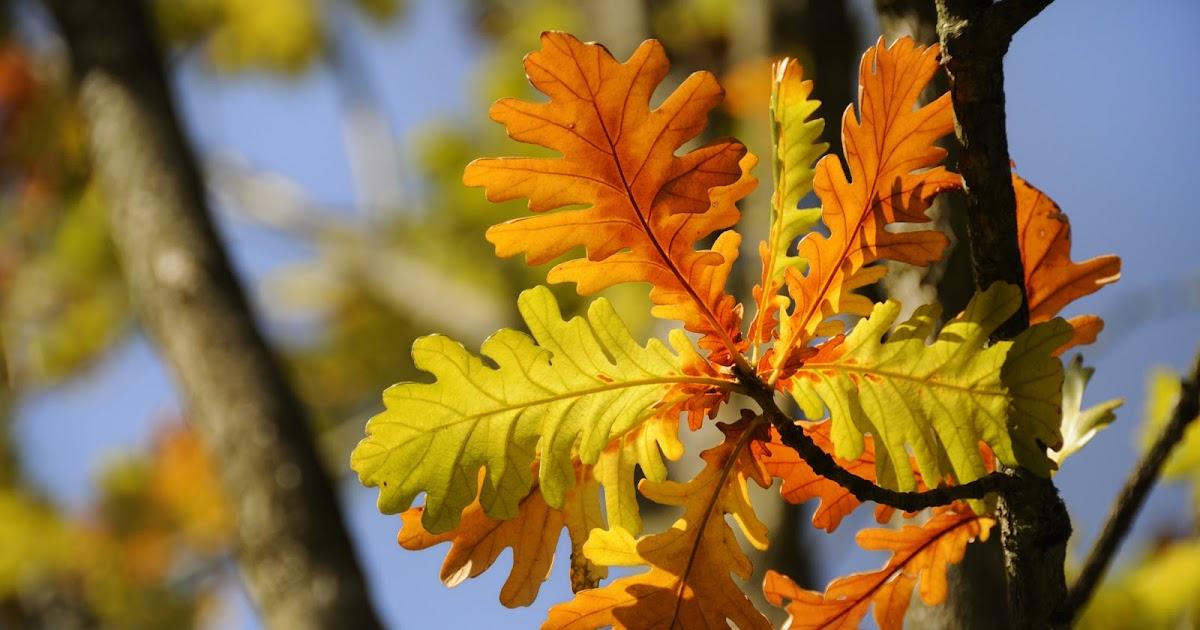 Le jardin de pascaline les plantes d 39 int rieur lumi re for Arrosage plante hiver