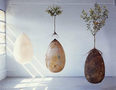 buongiornolink - Addio alle bare la sepoltura in gusci organici trasformerà i vostri cari in alberi