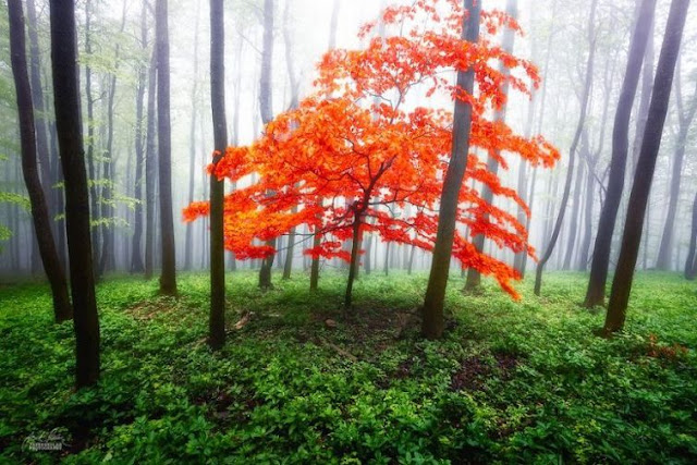 World's Most Beautiful Forest Pictures