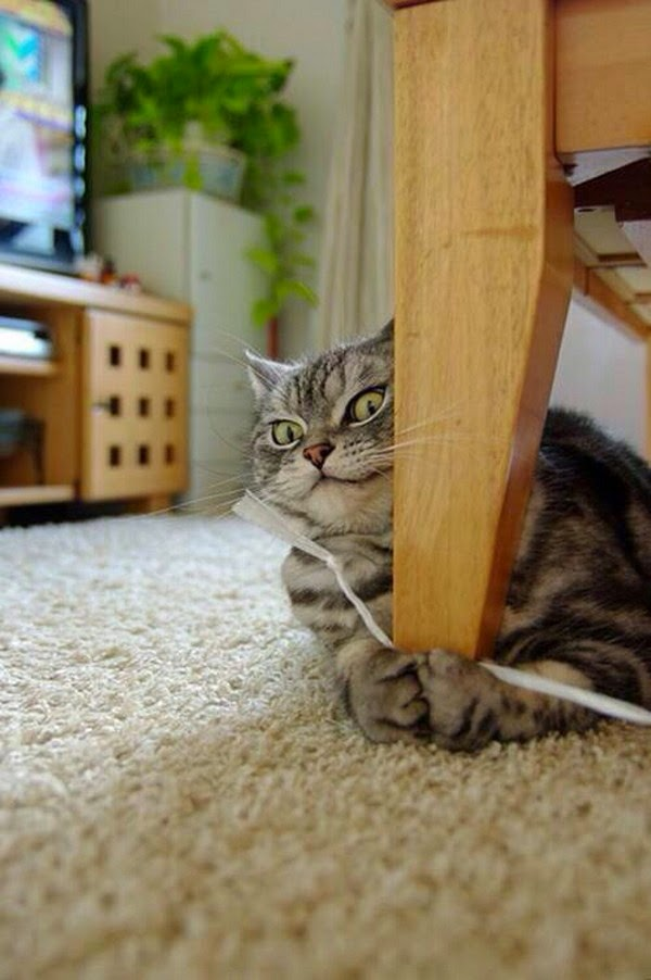 Funny cats - part 121 (40 pics + 10 gifs), cat pictures, cute cats