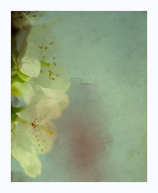 Jetty Kolobaric - Blossom Melancholy