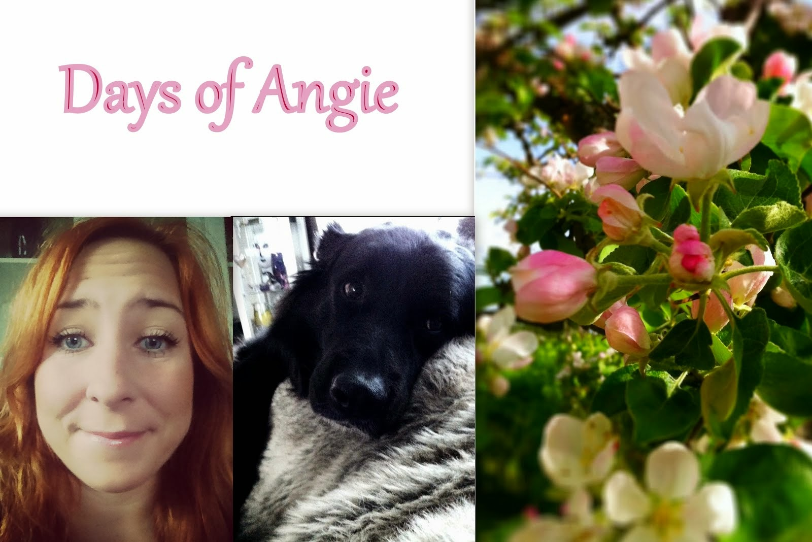 Days of Angie
