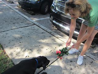 Carolyn is bending down and holding out some silk flowers to Coach who is leaning out to sniff them.